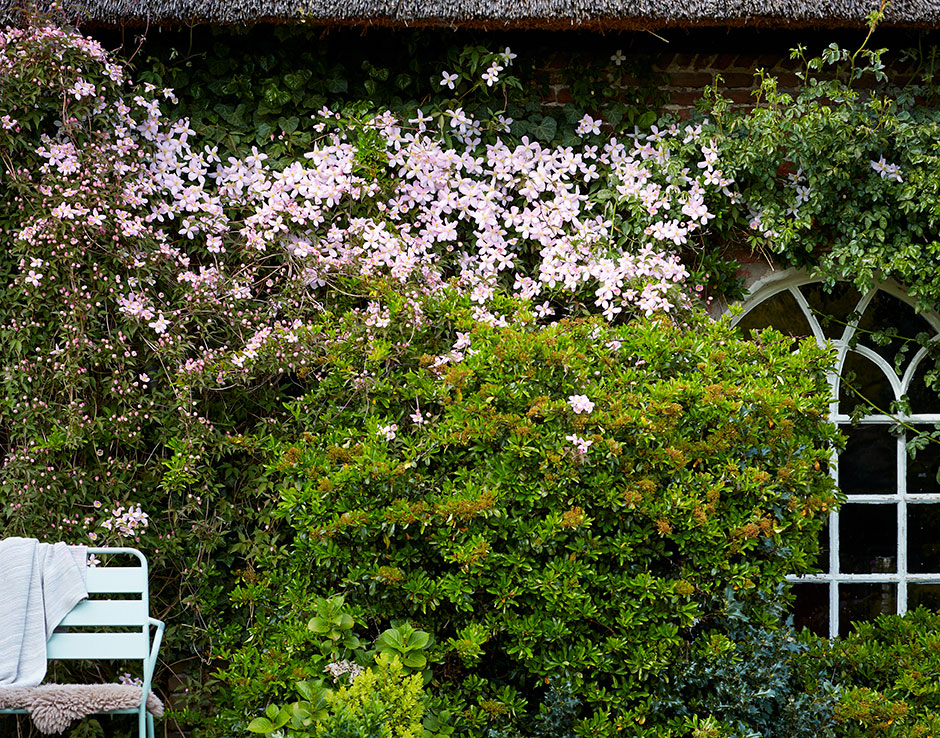 Garden plant of the month for april clematis vida verde - Vegetable garden what to plant in april ...